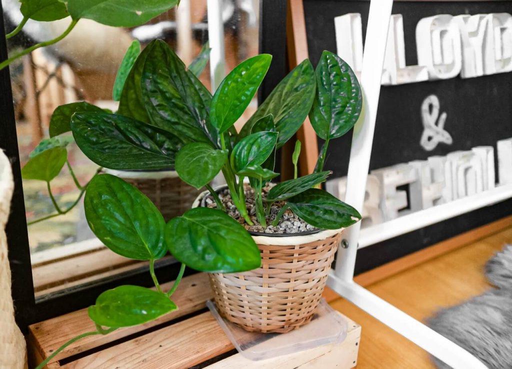 plants cebu philippines blog