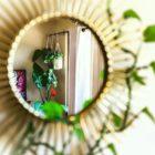 mirror interior plants cebu philippines